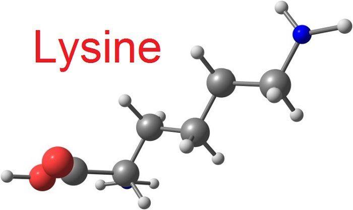 Lysine hay còn được gọi là L - lysine, đây là một axit amin vô cùng thiết yếu đối với cơ thể con người