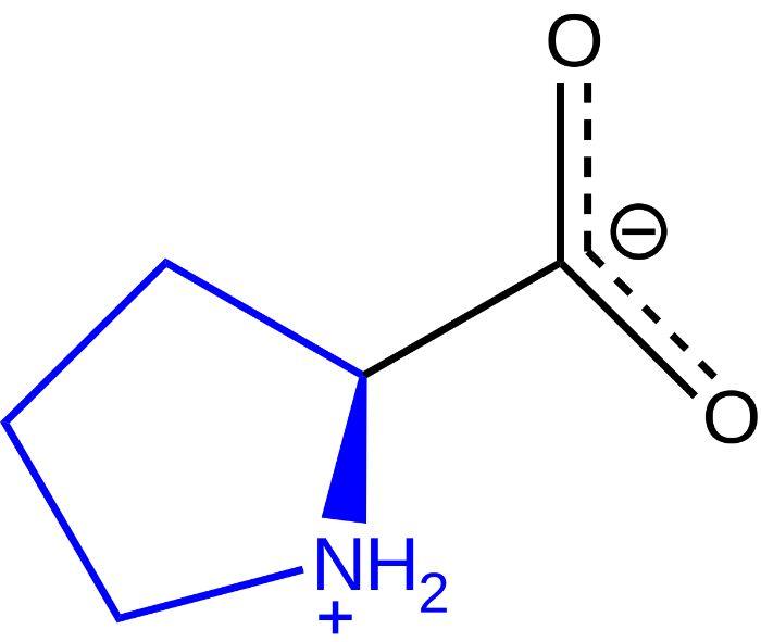 Proline trên thực tế là một loại axit amino nhưng lại có nhiều tự tương đồng với các axit amin