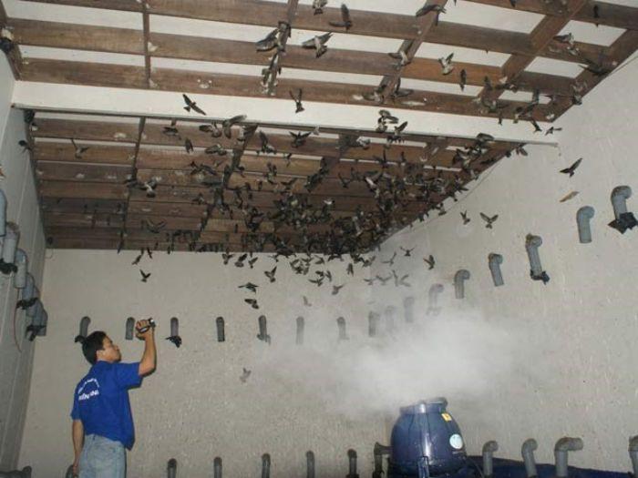 Nhiệt độ thích hợp nhất để chim yến có thể phát triển và sinh trưởng là 20 – 32oC, còn độ ẩm là trên 65%