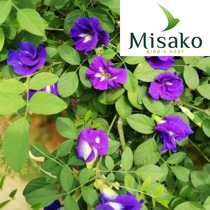 Điều đặc biệt là loài hoa này còn có thêm khả năng bảo vệ tim mạch, giữ ổn định lượng đường ở mức cho phép